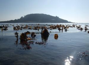 looe marine conservation