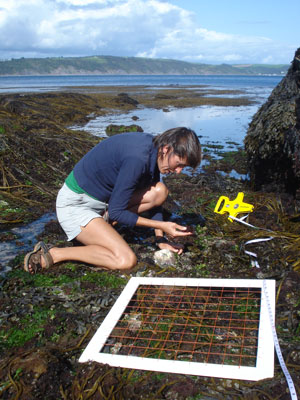 What-we-do-intertidal-surveys