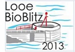 Looe Bioblitz 2013
