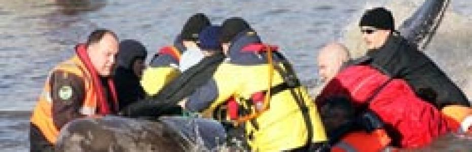 Dolphin Rescue BDMLR