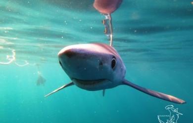 Shark Night in Looe