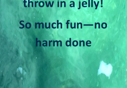 Throw Jelly Not Balloons