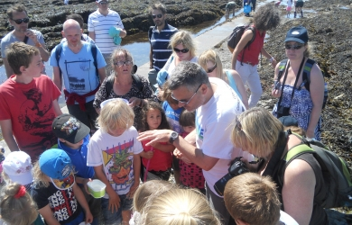 Rock pooling with Looe Marine Conservation Group