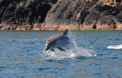 Cornish Marine SightingsMarine Sightings