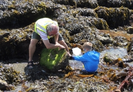 Easter Rockpool Ramble