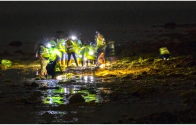 Night Rockpooling