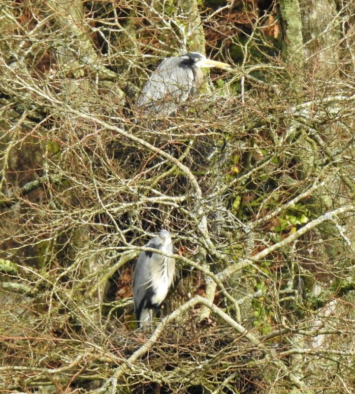 In the heronry