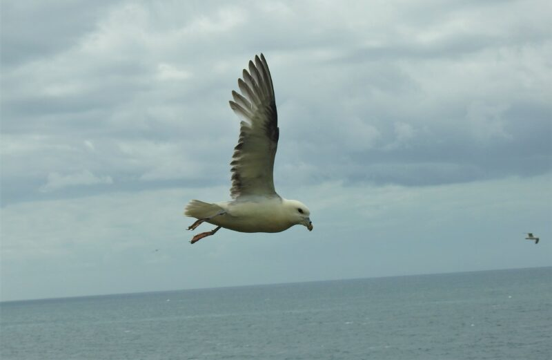 Close encounter with a Fulmar