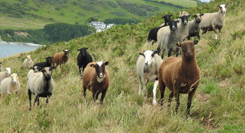 Shetland muggers?