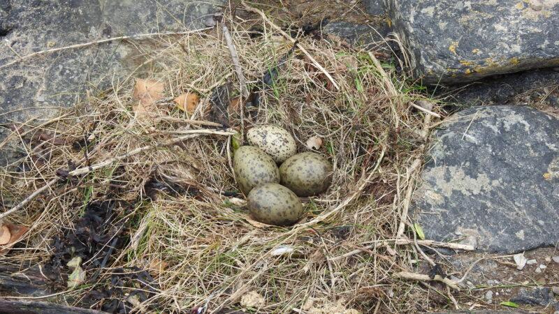 Hybrid nest
